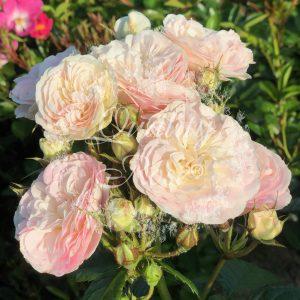 Bouquet Parfait®