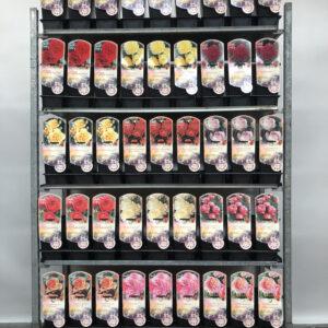CC Trolley  Nr 7        Fleur Romantica Meilland®