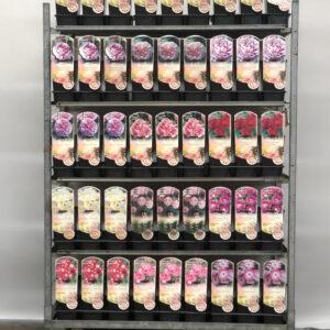 CC Trolley  Nr 10      Struik – heesterrozen 'Classic + Rugosa + Oude rozen '